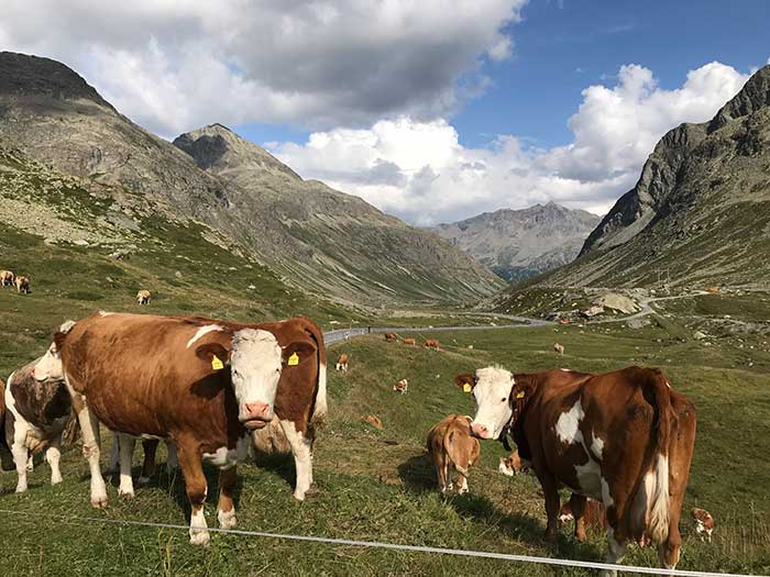 Inquisitive locals line the road near St. Moritz, Switzerland