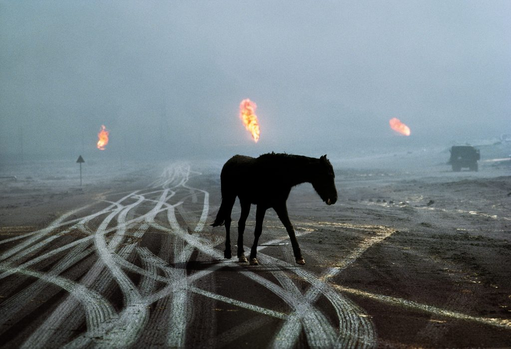 CAPTION: Horse and Tire Tracks. Kuwait, 1991. Al Ahmadi oil field, Kuwait, 1991. MAX PRINT SIZE: 40x60 When McCurry was travelling throughout Kuwait he came across numerous horses, lost and bewildered among the horror of the burning landscape. Many were thoroughbreds, once owned by wealthy Kuwaitis, but in the midst of war many were let loose (and occasionally slaughtered) by the Iraqi Army. IG 4/19/2018 (ARCHIVED): An abandoned racehorse looking for water, Al Ahmandi oil field, Kuwait, 1991. Ordered by Saddam Hussein, the Kuwaiti oil fires were caused by setting fire to over 600 oil wells. Magnum Photos, NYC28963, MCS1991003K068 Phaidon Arabian thoroughbred, al-Ahmadi oil field, Kuwait, 1991. Pg 90,91, Untold: The Stories Behind the Photographs final print_milan final print_MACRO final print_HERMITAGE Iconic_book Untold_book final print_Animals retouched_Sonny Fabbri, Scott Mclane, Emily Rogers, Morgan Shortell 05/01/2019