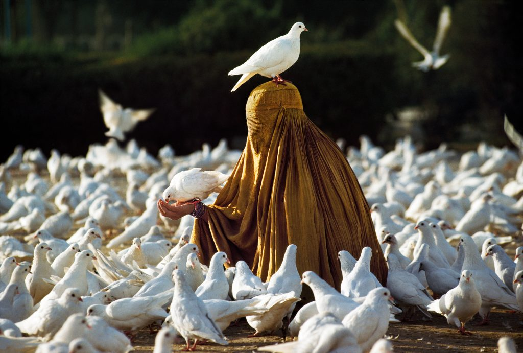 00203_13, Afghanistan, 1991, AFGHN-12385NF7. Woman feeding doves near Blue Mosque. IG: Woman feeds doves in front of the Blue Mosque, Mazar-i-Sharif, #Afghanistan, 1991. Legend says the mosque is so sacred that any dove with a speck of color on it's feathers will instantly become pure white after entering the mosques vicinity. 10/09/2018 final print_milan final print_Animals retouched_Sonny Fabbri 11/24/2015, JJ Garfinkel, Frank Carbonari 11/12/2018